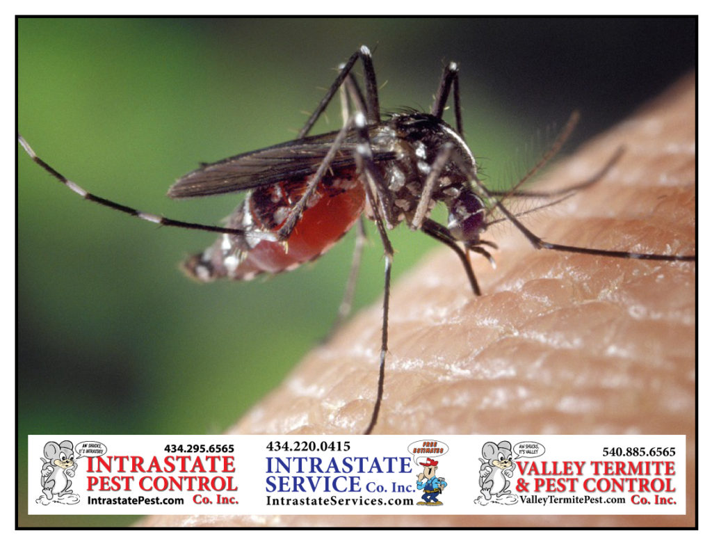 Best Way To Protect Your Family From Mosquitoes Valley Termite